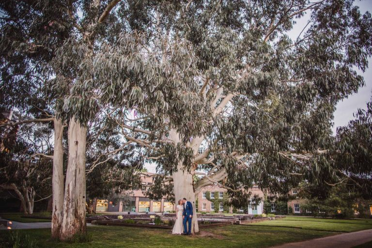Bride and groom kiss under a eucalyptus tree in Kew Gardens